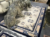 A fringed Chinese rug on cream ground, 275 cm x 184 cm.