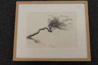 Alan Stones : Thorntree (I), charcoal, signed, dated 12.06.10, 37 cm x 37 cm, exhibition labels verso, framed.