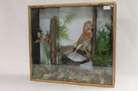 Three early twentieth century taxidermy display cases containing birds. (3)