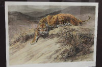 Sir Herbert Dicksee : Stealth (Leopard), etching, with hand colouring, with margins, 50 cm x 70 cm, framed.