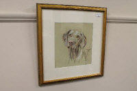 Jacqueline McAteer : 'Head study of a pointer', colour chalks, signed, 26 cm x 25 cm, framed.