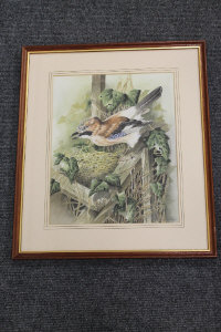 E.Aitken : A nesting Jay, watercolour, signed in pencil, 32 cm x 25 cm, framed.