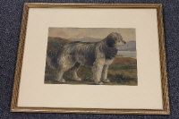 Charles Meadows : Study of an Irish Wolfhound, watercolour, signed, 23 cm x 33 cm, framed.